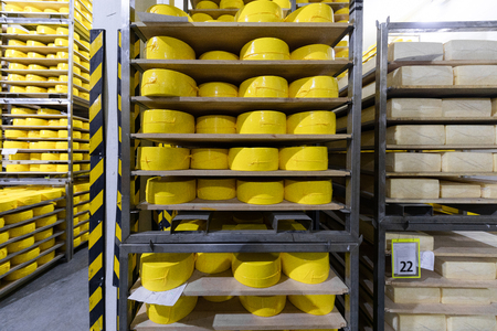 Cheese stacked on shelves in a cheese farm. Cheese with raclette in ripening cellar in a close up image. Many cheese-wheels maturing on different shelves at the cheesemaker cellar Фото со стока