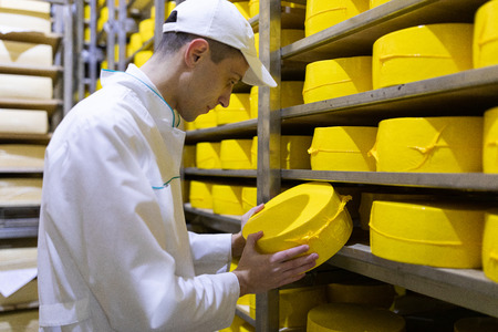 technologist with cheese in his hands make an inspection of ready prooduction at the department of dairy factory Фото со стока