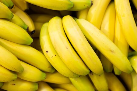 Raw organic cavendish bananas for sale at season market. Rich in vitamins for sustainable healthy diet.