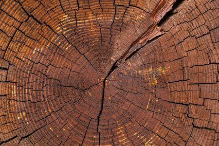 Primo piano del taglio incrociato di un albero secco con anelli annuali
