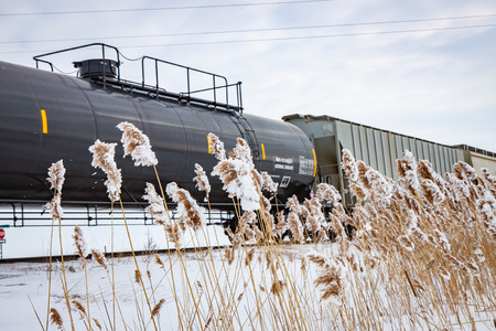 cattails: Railway Train in Winter With Frozen Cattails