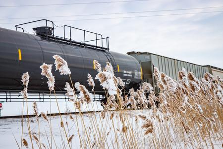 cattails: Railway Train in Winter With Frozen Cattails