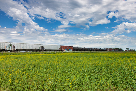 railway transportation: Freight Train Rolling Past Canola Field Under Blue Sky