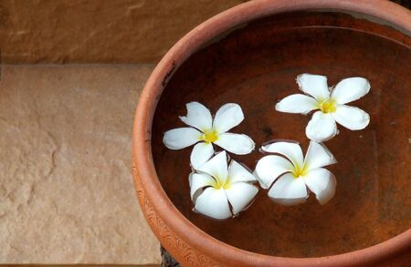 Plumeria flowers in terracotta pots