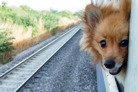 Cute dog on the train window