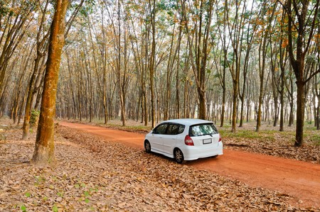 White city car in the rubber plantation photo