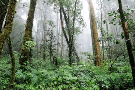 Forest on the highest mountain in Thailand photo