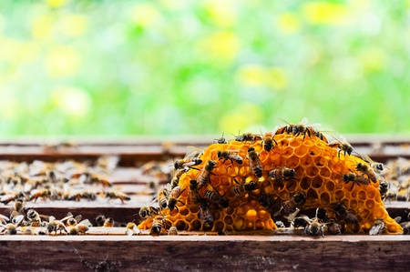 Small honey comb in the box of farmland photo