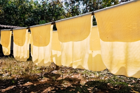 Latex of rubber tree drying on the washing line in southern of Thailand Stock Photo - 8821837