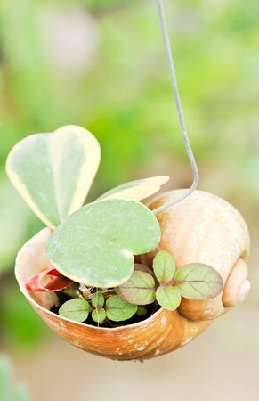 Little plant in the shell hanging on the tree. photo