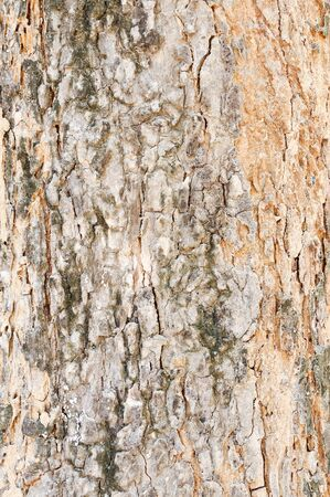 Texture of old tree  in the national park. photo