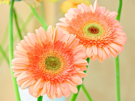 Ornage daisy  in the vase  of exhibition hall. photo