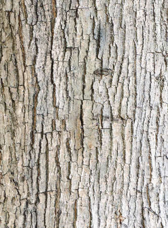 Texture of bark  in the natural park. photo