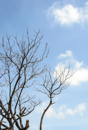 Clear blue sky over the bare tree in winter time  photo