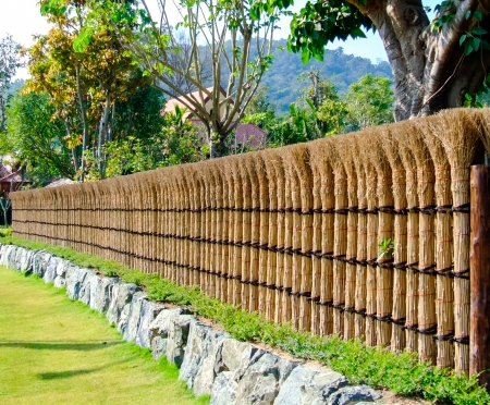 Natural fence of Japanese house in summer time  photo