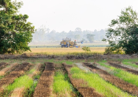 Harvesting car is running on the paddy field  Stock Photo - 17170217