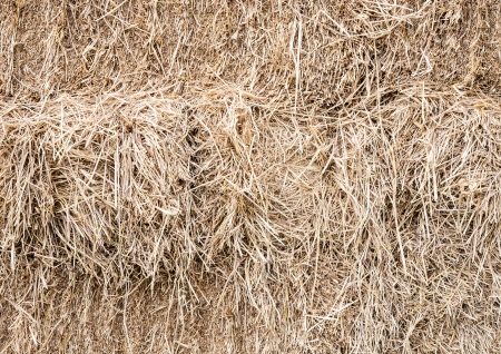 dry cow: Dry straw for the cow in countryside of Thailand.