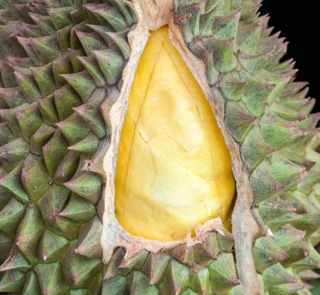 Fresh durian is open the rind in Thai market  photo