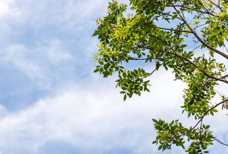 Fresh leaves of tree branch in the summer time  photo