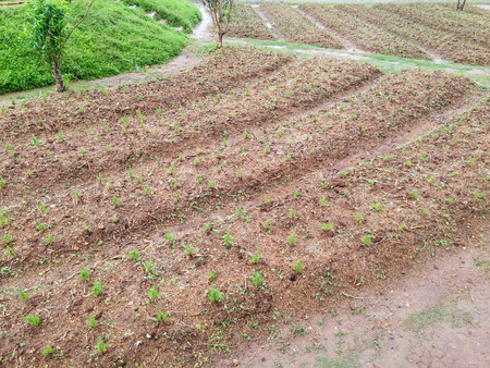 Vegetable plot of the countryside garden.