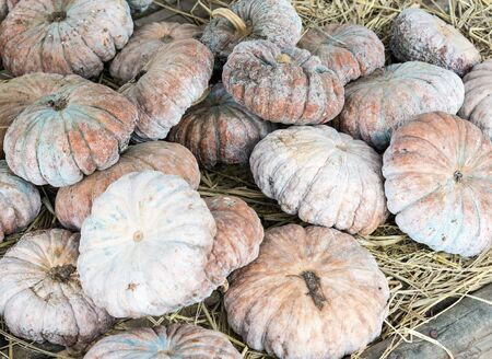 hard sell: pile pumpkin in the shelves of organic farm.