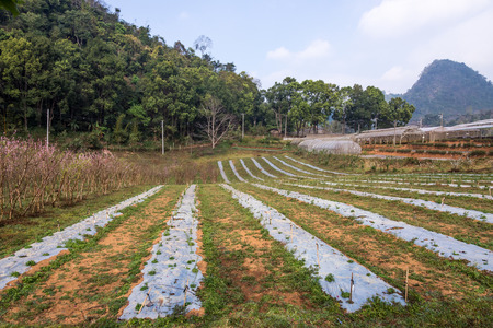 plot: Vegetable plot in organic farm on the high mountain.