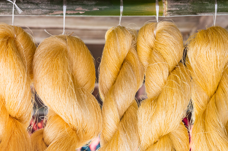 purl: Golden raw silk is hanging for ready to made a silk.