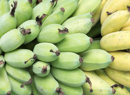 Bananenbos met de rauwe banaan en scheur van de orgainc-boerderij op het platteland van Thailand. Stockfoto