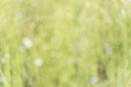 Abstract background of the flower field in the national park,(blurred focus).