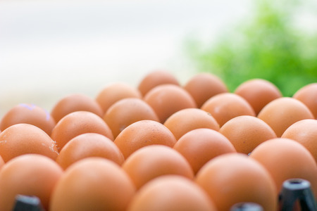 Fresh chicken eggs from farm  natural green background.