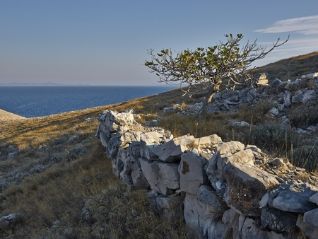 kornat: Tree and stone wall on the island of Kornat