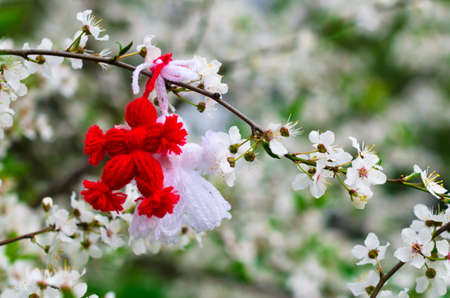 Red and white beautiful martisor hanging on the branches of the blooming tree. Martenitsa beginning of spring celebration. Romania and Bulgaria tradition. White flowers