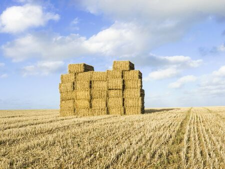 late summer: Large stack of straw bales in field after harvesting