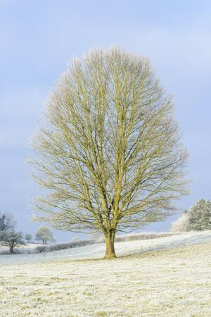 Tree in landscape on frosty morning photo