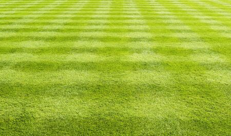 cross hatched: Lawn with the grass closely cut in a cross hatched pattern