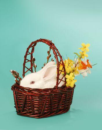eared: white rabbit in basket