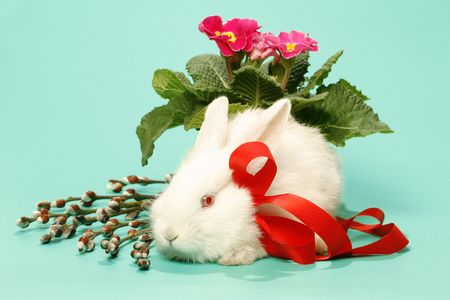 eared: white rabbit from bow on green background Stock Photo