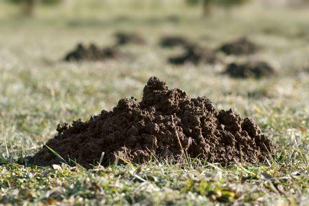 mole hills on pasture, mole mound