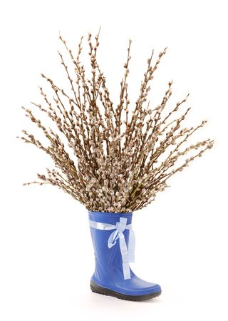 pubescent: pussy-willow in blue shoe, white background Stock Photo