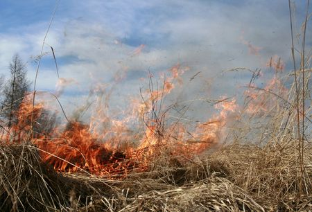 wastelands: meadow fire sends out large smoke clouds after burning a grass wastelands, natural disaster, burn off