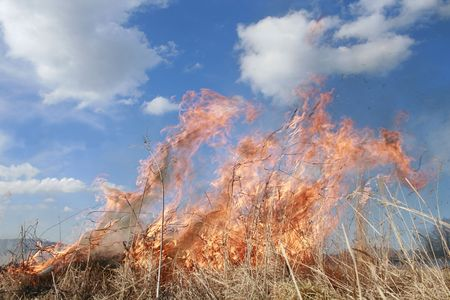 wastelands: meadow fire and burning a grass wastelands, natural disaster