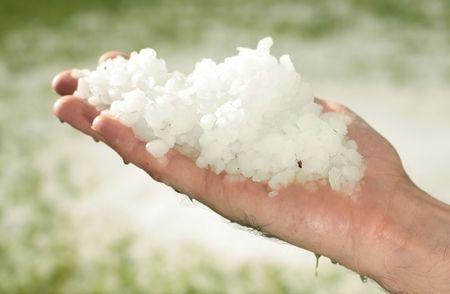precipitaci�n: el granizo en el c�sped despu�s de la tormenta, granizo del tama�o de guisante cay� en pradera, el granizo, por un lado muchos