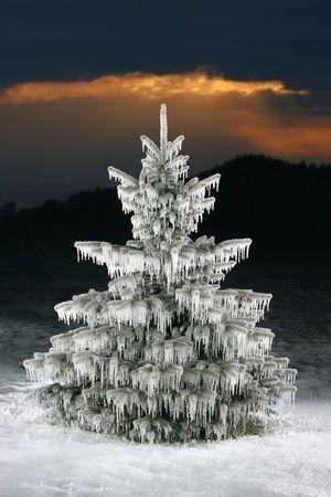 icicles: christmas tree icicles, blue spruce on sunset background Stock Photo
