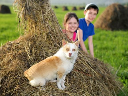 Summer landscape, dog on mounds and children peeking from behind the hay Stock Photo - 7364440