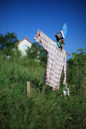 Scarecrow on a field with vegetables  photo