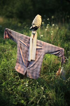 Scarecrow, mannequin dressed in old clothes, stands guard in field in Poland,  photo