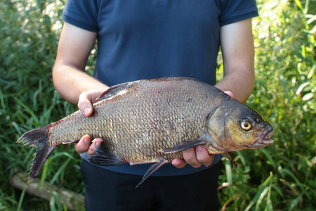 abramis: Fisherman holding common bream