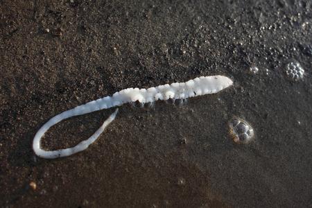 enteric: Fishy parasite tapeworm lying on the lake shore