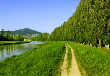 poplar  banks: Path between the river and abele trees in summer, Slovakia