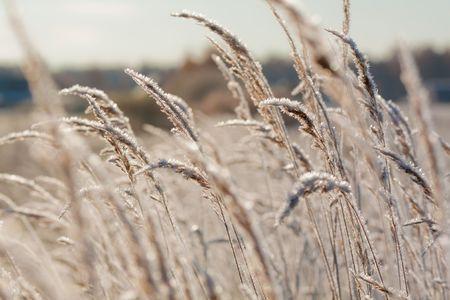 Frost Grass Nahaufnahme Natur Standard-Bild - 6266824